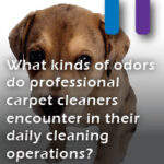 daily odors